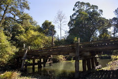 Fawcetts小河绿色鸽子 库存照片