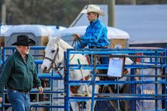 2018 FAWE Rodeo. Rodeo event at the 3rd Annual FAWE Expo in Hernando County, Florida showcased bull riders, ladies barrel racing and calf roping Royalty Free Stock Images