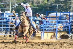 2018 FAWE Rodeo. Rodeo event at the 3rd Annual FAWE Expo in Hernando County, Florida showcased bull riders, ladies barrel racing and calf roping Royalty Free Stock Photos