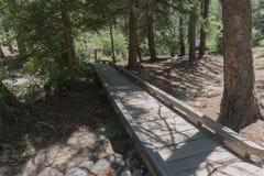 Fawn湖木路在新墨西哥 免版税图库摄影