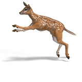 Fawn Stock Images
