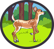 FAWN DEER FOREST Stock Image