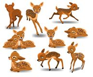 Fawn doing different activities isolated on white background. Fawn cartoon character doing different activities like running, resting, sleeping isolated on white Royalty Free Stock Image