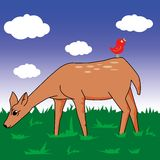 Fawn in a field Royalty Free Stock Image
