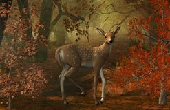 Fawn in the forest Stock Image