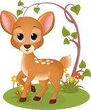 Fawn in the forest Stock Photos