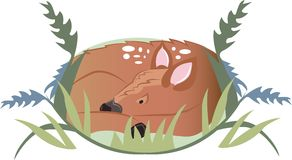 Fawn In Grass Stock Photography