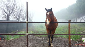 Fawn Horse Pawing the ground stock video footage