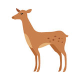 Fawn Isolated. Junior Verdant Young Spotted Deer Stock Image