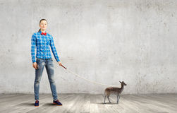 Fawn on lead Stock Photography