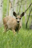 fawn lopend in het meest forrest berg stock fotografie