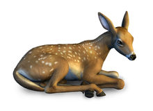 Fawn Resting - includes clipping path Royalty Free Stock Photo