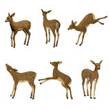 Fawn set Stock Photo