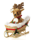 Fawn in a Sleigh Stock Photo