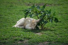 Fawn Taking una siesta imagenes de archivo