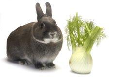 faworyt jego portreta królika warzywa Obrazy Royalty Free