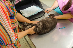 Faz o veterinário vacinou o gato, senhora dos gatos mantém seu animal de estimação imagens de stock