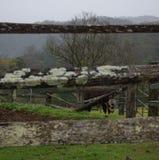 Fazenda de Dayboro Imagem de Stock Royalty Free