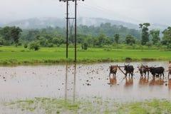 Fazendeiro - Índia Foto de Stock Royalty Free