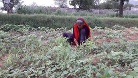 Fazendeiro Imagem de Stock