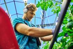 Fazendeiro amigável que trabalha na plataforma hidráulica do elevador de tesouras na estufa fotos de stock royalty free
