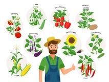 Fazendeiro bonito e sua colheita em torno dele Ajuste das plantas vegetais e dos frutos maduros, tomate, pimenta de pimentão, gir ilustração stock