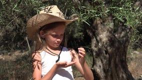 Fazendeiro Child Studying Olive Fruits no pomar, menina que joga pela árvore 4K video estoque