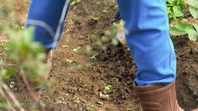 Fazendeiro com campo da remoção de ervas daninhas da enxada vídeos de arquivo