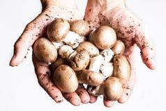 Fazendeiro com cogumelos Foto de Stock Royalty Free