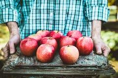 Fazendeiro com maçãs Fotografia de Stock Royalty Free