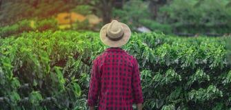 Fazendeiro com o chapéu que está em um campo da plantação de café Foto de Stock Royalty Free