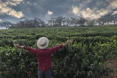 Fazendeiro com o chapéu que olha o campo da plantação de café Fotografia de Stock Royalty Free