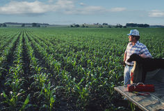 Fazendeiro com o cão no campo de milho Imagens de Stock
