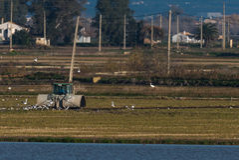 Fazendeiro com o trator no campo do arroz Foto de Stock Royalty Free