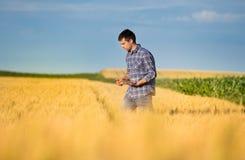 Fazendeiro com a tabuleta no campo de trigo fotografia de stock