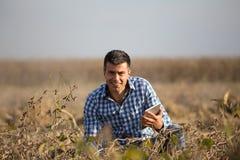 Fazendeiro com a tabuleta no campo maduro do feijão de soja imagem de stock