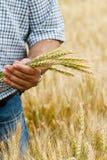 Fazendeiro com trigo nas mãos. imagens de stock royalty free