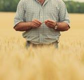 Fazendeiro com trigo nas mãos foto de stock royalty free
