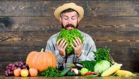 Fazendeiro curioso fazendeiro maduro farpado Festival da colheita cozinheiro chefe do homem com a colheita rica do outono Aliment imagens de stock royalty free