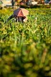 Fazendeiro da cebola Fotos de Stock