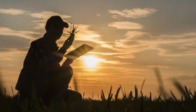 Fazendeiro da jovem mulher que estuda as plântulas de uma planta em um campo, usando uma tabuleta imagem de stock