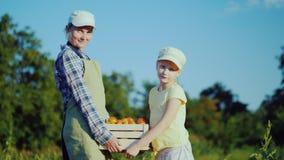 Fazendeiro da mulher com a filha que guarda uma caixa dos tomates de seu campo vídeos de arquivo