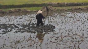 Fazendeiro da mulher que trabalha no campo com enxadas video estoque