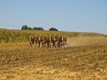 Fazendeiro de Amish que ara o campo imagem de stock