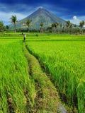 Fazendeiro do arroz do mayon da montagem Imagens de Stock
