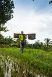 Fazendeiro do Balinese com uma cesta que trabalha nos terraços verdes UBUD do arroz, Indonésia, Bali imagem de stock