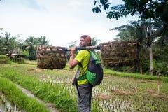 Fazendeiro do Balinese com uma cesta que trabalha nos terraços verdes UBUD do arroz, Indonésia, Bali fotografia de stock