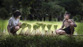 Fazendeiro do rapaz pequeno e da menina em campos verdes foto de stock royalty free