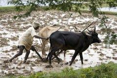 Fazendeiro do subsitance de Peasent - India fotografia de stock royalty free
