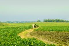 Fazendeiro dois que atravessa o campo Imagem de Stock